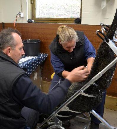 Lawrence Heathman assisterar veterinären Michylla Seal vid insättningen av embryon.