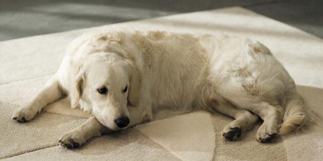 10 smarta städtips för hundägare