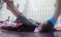 Skakande bilder från fransk slakt