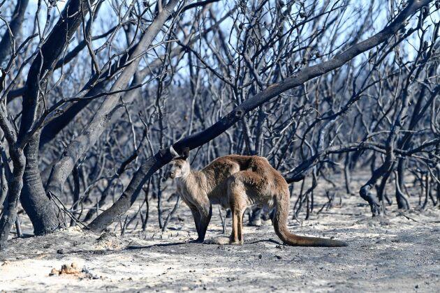 Gensvaret från människor runt hela världen har varit enormt i spåren av bränderna i Australien.