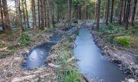 Blöta skogsmarker oroar i Skåne