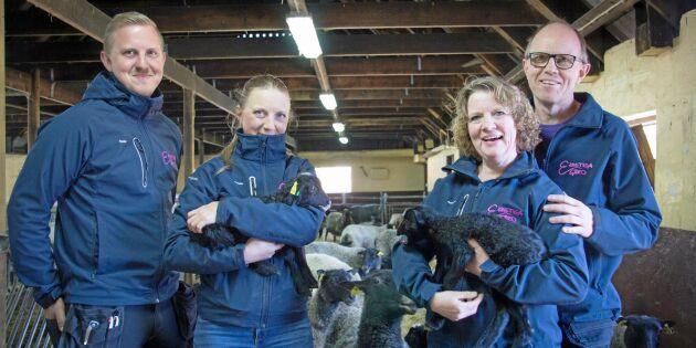 Högtryck på lammgården inför påsk