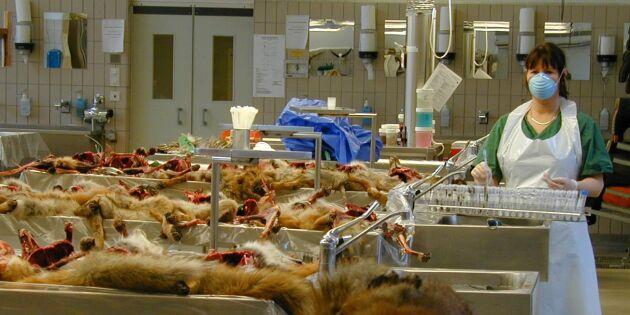 Inga pengar till kontroll av vilda djurs hälsa