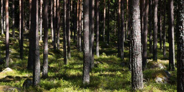 Färre olyckor i skogen – men stort mörkertal
