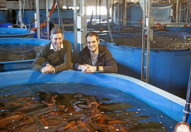 Marinbiologen Johan Ljungquist och vattenresurs ingenjören Mikael Olenmark i hallen där den 7:e generationens system producerar 36 ton fisk om året.