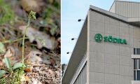Orkidé stoppade avverkning – nu stämmer Södra staten