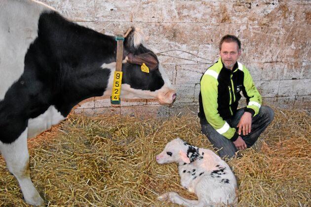 Magnus Gustafsson, mjölkproducent i Bökeberg, Halland, tycker att Skånemejerier ekonomisk förening har misslyckats med att lyfta fram mervärdena i den sydsvenska mjölken. OBS arkivbild.