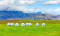 Norge importerar 30 000 balar grovfoder från Island