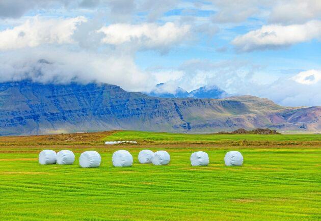 De isländska bönderna ser ut att få ganska goda skördar i sommar. Arkivbild.