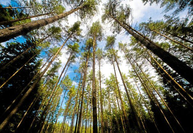14,8 miljoner hektar, eller 63 procent av Sveriges produktiva skogsmark, är nu certifierad enligt PEFC eller FSC.