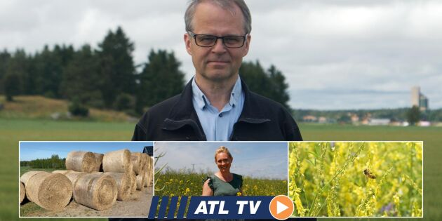 ATL TV: Fullt surr i Brunnbys mellangrödor