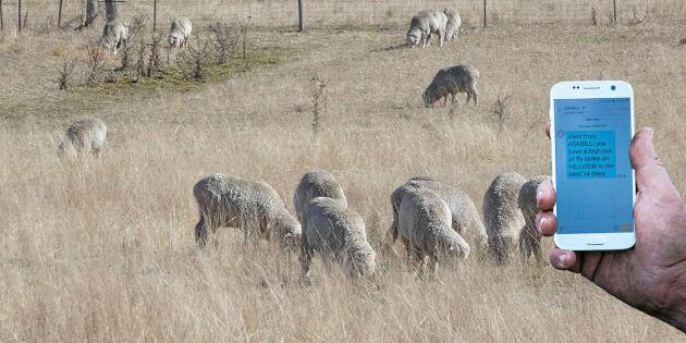 """Australiska appen """"Fråga Bill"""" vet hur fåren mår"""