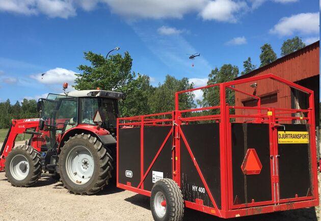 Grannarna har lånat ut boskapsvagnar som står redo på gården om Jennie Preiholt blir tvungen att evakuera även köttdjuren. I bakgrunden syns brandhelikoptrarna.
