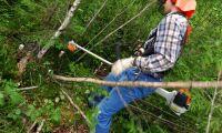 Samarbete ska få fler till gröna jobb