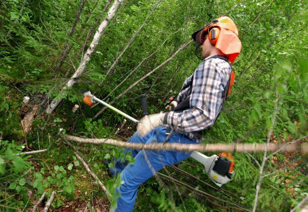 Skogsägare, var god röj! Den uppmaningen verkar i högre grad gälla andra skogsägare än de enskilda.