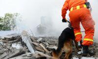 Nu får skogsbrandhundar egen utbildning