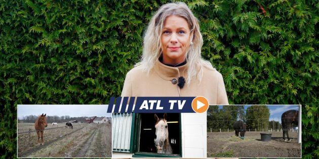 ATL TV: Hästspecial