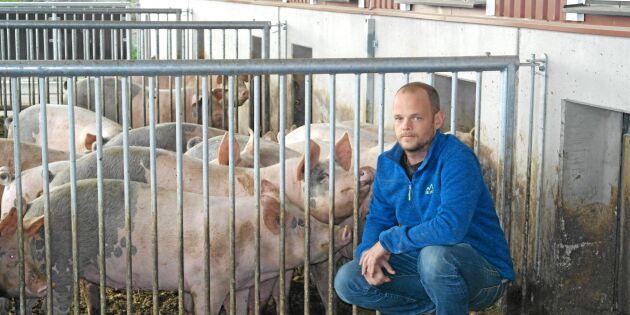 Satsar 7,5 miljon på ekologiskt grisstall