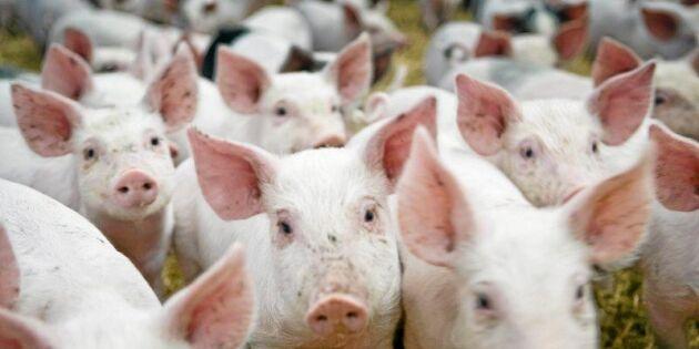 Klartecken för nya djurskyddsregler