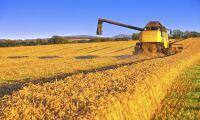 Prognos: Lägsta globala veteproduktionen sen 2013