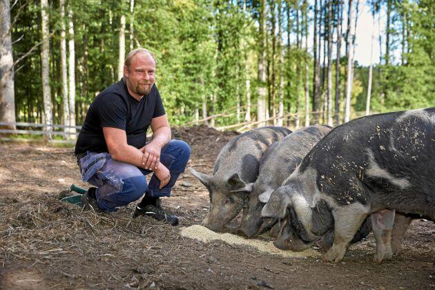 Daniel med några av gårdens frigående Linderödssvin.