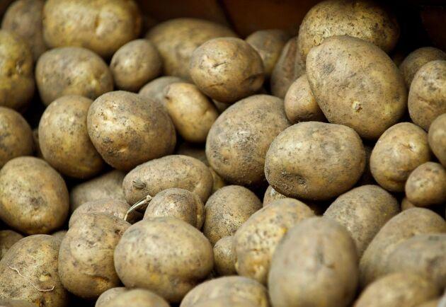 En skånsk lantbrukare har hittat en misstänkt granat i samband med potatisskörd i närheten av Bäckaskog utanför Kristianstad. Arkivbild.