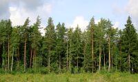 Skogsfond Baltikum växer enligt plan