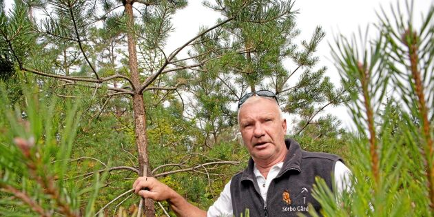 """Skogsägaren: """"Vi går mot katastrof här"""""""