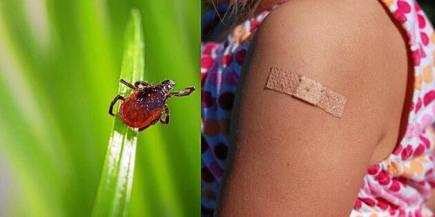 Därför är det inte för sent att vaccinera sig mot TBE – allt om fästingvaccinet