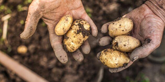 """Potatisbonden: """"Betyder mycket för äganderätten"""""""