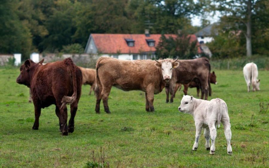 Land.se skriver om det nya sättet att köpa kött, cowfunding