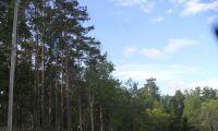 Lista: Här är det bäst att investera i skog