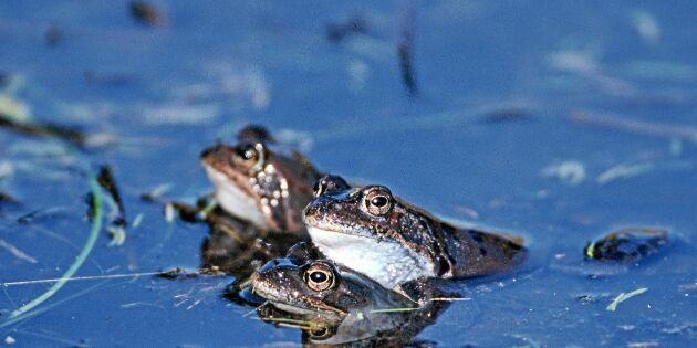 Nya initiativet – rapportera grodor på vägen