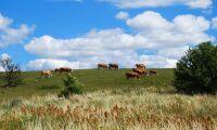 Politiska beslut oroar lantbruksföretagare