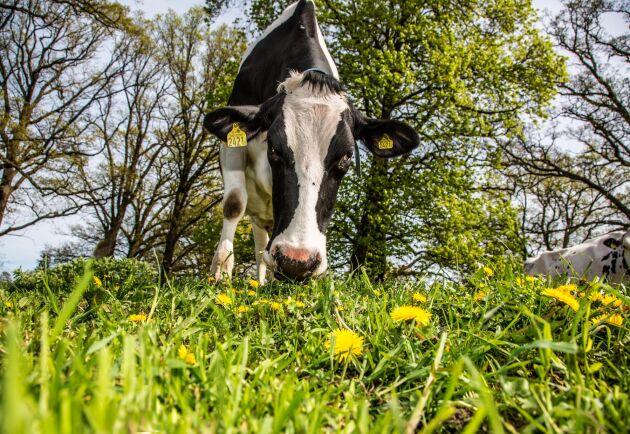 Ekologiska Lantbrukarna förnekar forskning och fakta som inte passar deras syften, menar debattörerna.