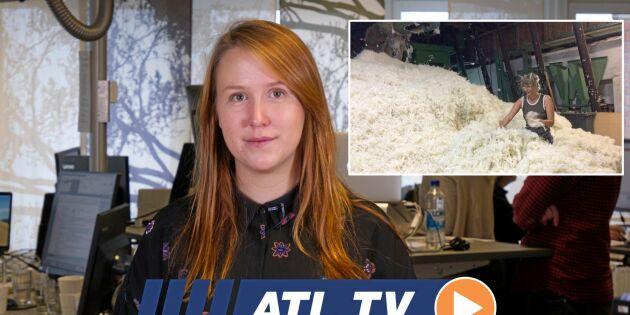 ATL TV: De tvättar ett ton ull om dagen