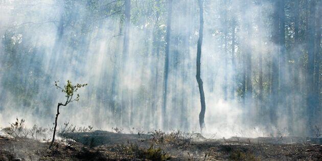 Extrem brandrisk – skogsbolag ställer in jobb
