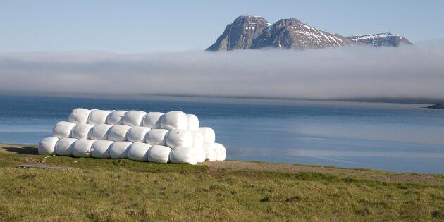 Island exporterar grovfoder till Norge
