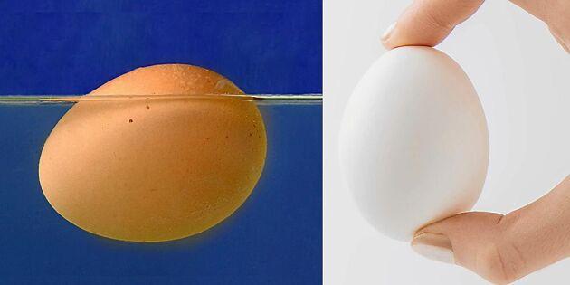 Så vet du om ägget är ok att äta – 2 smarta husmorsknep!