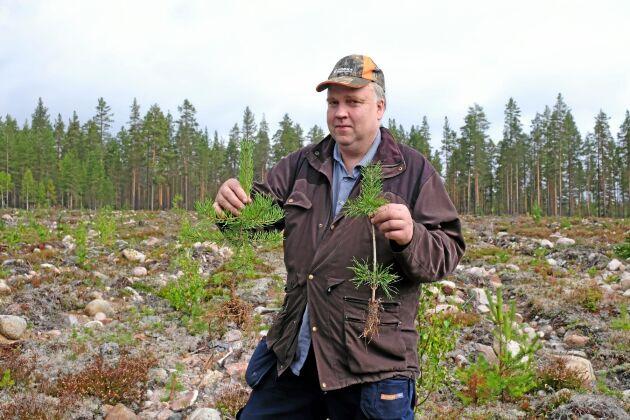 Skogsägaren Lars-Olov Lundmark med en gödslad planta och en utan gödsel.