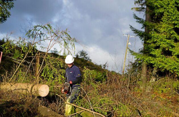 Röjningsarbete efter stormen Simone som fällde 1,5 - 2 miljoner kubikmeter.