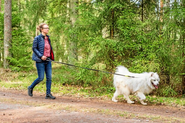 Promenera med hunden är ett smart sätt att lätt komma upp i ett hälsosamt antal steg.