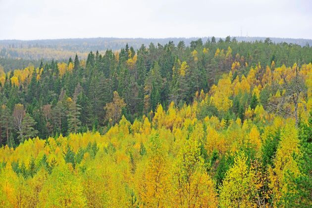 Rätt använd kan skogsbruksplanen vara användbar för skogsägaren men det gäller att uppdatera den med jämna mellanrum.