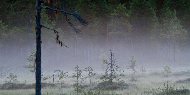 Stor skogsareal säljs av Holmen