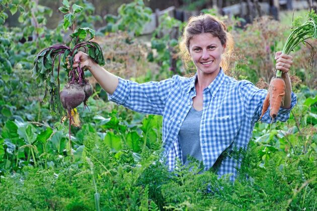 En vuxen kvinna 145 kilo potatis, rotfrukter och grövre grönsaker per år – en man behöver 187 kilo.