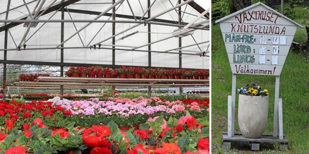 Etablerad handelsträdgård till salu för pangpris