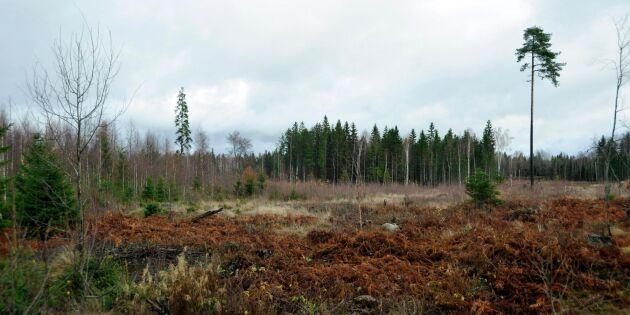 Därför hoppade Naturskyddsföreningen av skogsstrategin