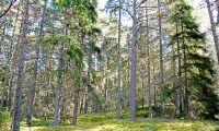 Skogsutredningen begär förlängning