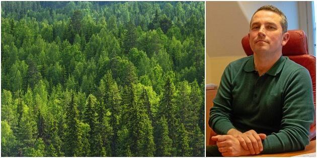 Han vill göra skogsföretaget till en folkaktie