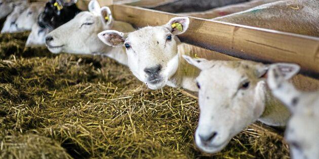 Allt färre djur på svenska gårdar